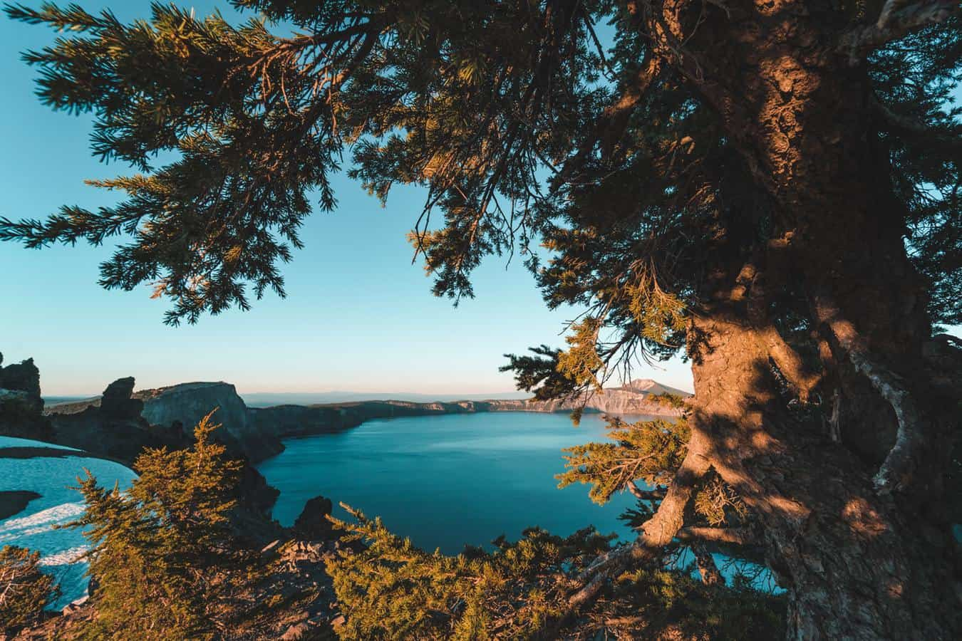Tree overlooking lake with blue water in British Columbia.